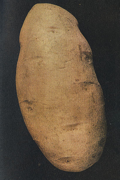 The Burbank Potato